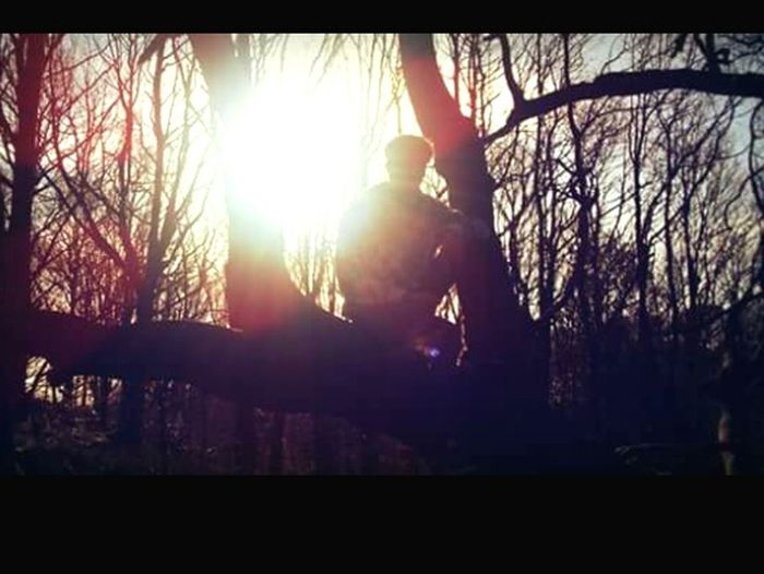 Trees Silloette And Sky In The Forest A Walk In The Woods Chilling ✌ Sun Through The Trees