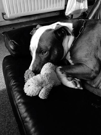 Mon chien Demon Dog € First Eyeem Photo