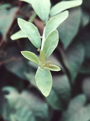 Leaf Growth Flower Nature Fragility Petal Beauty In Nature Plant Freshness Green Color Flower Head Close-up No People Outdoors Day Blooming Periwinkle