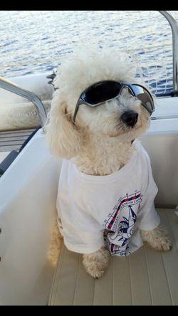 Cool Dog Captain Dog Sailing