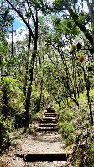 Stairs Nature EyeEm Nature Lover Natural Beauty Nature Lover Nature Shot Nature Photography Nature_collection Surrounded By Nature Trees Tree Trail Follow The Path Uphill Beautiful Outdoors In The Mountains Mountain Hiking Mountains Bushlands Australia Nsw Daylight