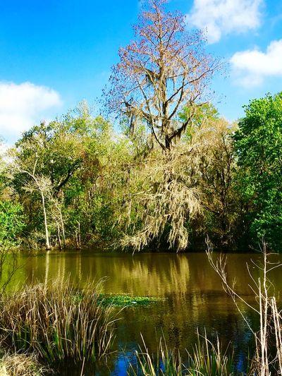 Swamplife Swamp