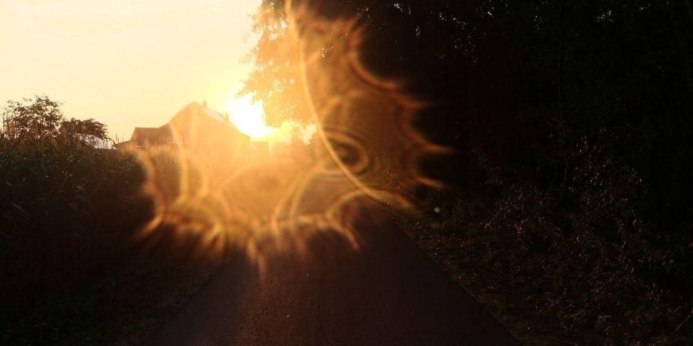 The morning light Eyemphotography Eyem Best Shots Cycling Galaxy Black Background Astronomy Space Sunset Tree Sunlight Sun Pixelated Close-up Streaming Shining Sunbeam Silhouette