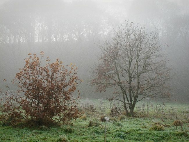 Foggymornings EyeEmbestshots Enchanted Forest Cold Temperature Frosty Days Outdoors Fineartphotograhy Tranquil Scene Scenics Landscape Non-urban Scene Woodlands Tranquility Beauty In Nature Tree Winter Is Coming Autumn Nature Growth EnchantedForest Day Fog Valleys Autumnbeauty Autumn Leaves Bare Tree
