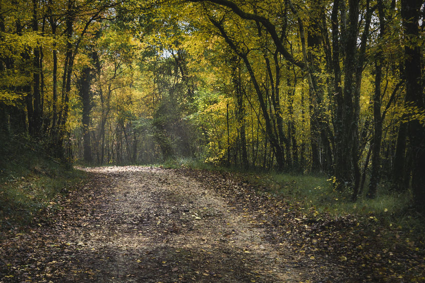 Tree Forest Plant Land Direction The Way Forward Tranquility Beauty In Nature Tranquil Scene Nature Growth WoodLand Non-urban Scene Footpath Road Dirt Day Autumn Scenics - Nature No People Diminishing Perspective Outdoors Change Trail