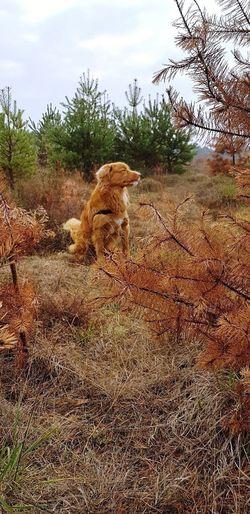 Novascotia Dog Wanderlust Morning Nature Tree Sky Sand Dune Atmospheric