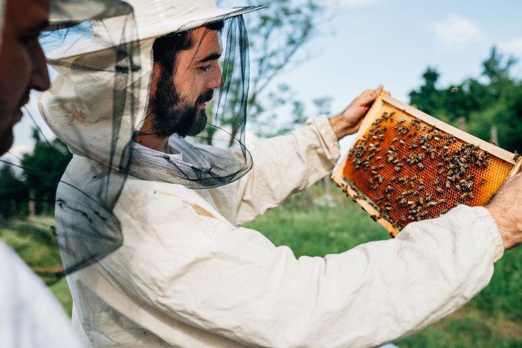 Side view of beekeepers examining beehive