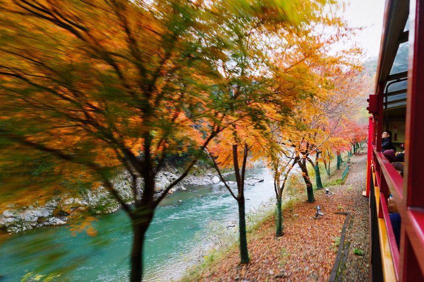 Moving Densha Japan Kansai Kyoto Kyoto Arashiyama Arashiyama