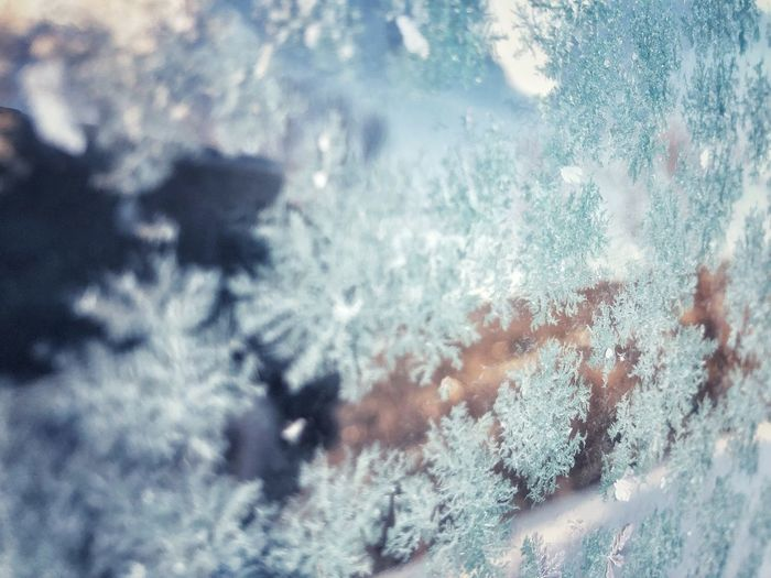 Close-up of snowflakes on window