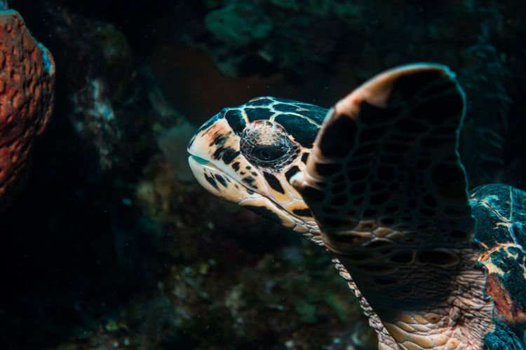 Close-up of turtle swimming in water