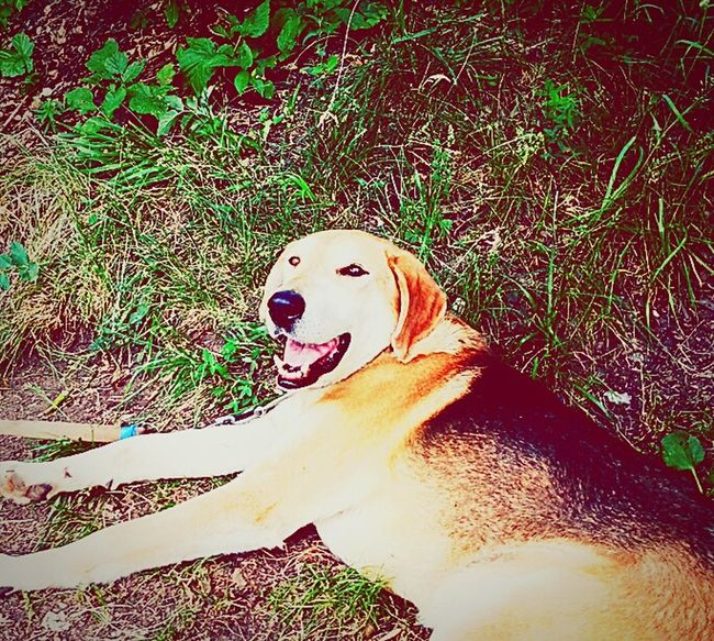 Taking Photos Enjoying Life Cheese! Animals Petstagram Petlover My Dogs Are Cooler Than Your Kids Dog Love