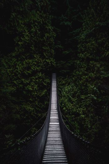 Into the uknown Lynn Canyon Bridge Lynn Canyon Plant The Way Forward Tree Direction Green Color Nature Growth Forest Land Day Tranquility Footpath Connection No People Diminishing Perspective Architecture Built Structure Beauty In Nature Outdoors Bridge
