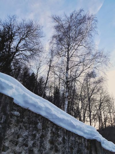 Tyrol-Austria Winter Cold Birch Birken Cold Temperature Snow ❄ Eyemphotography Eyemwinter Day No People Nature Outdoors Low Angle View Sky Beauty In Nature Tree