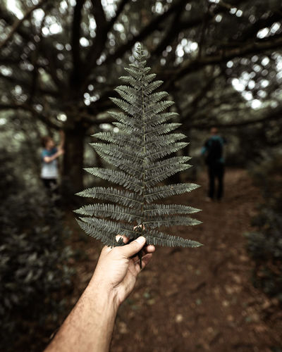 Close-up of hand holding leaf in forest