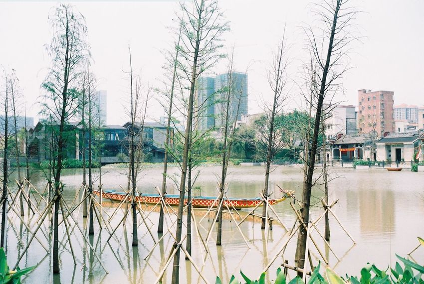 Dragon Boat Festival Water Building Exterior Architecture Built Structure City Outdoors Day Growth No People Waterfront Lake Tree Sky Nature Grass Extreme Weather Rollei35 Film Filmphotography