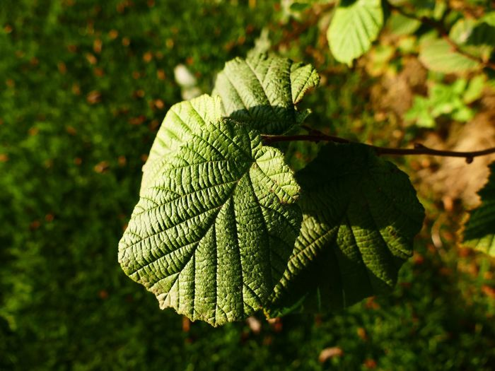 Leaves_collection Leaves Leaf Greenery Green Summer Sunshine Nature Showcase: February