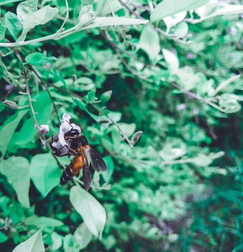honey bee Leaf
