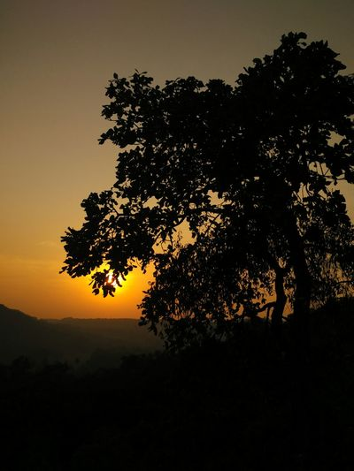 Dramatic sunset silhouette. Sunset Silhouette Tree Beauty In Nature Outdoors Nature Twilight Dramatic Lighting Trees Collection Tree Silhouette Sunset Silhouette Sunsets EyeEm Nature Lover Sunset_collection Silhouette Goa Eye4photography  Hilltop Goa 2016 Hilltop Temples Ponda Setting Sun Dusk End Of The Day Close Of Day Good Evening