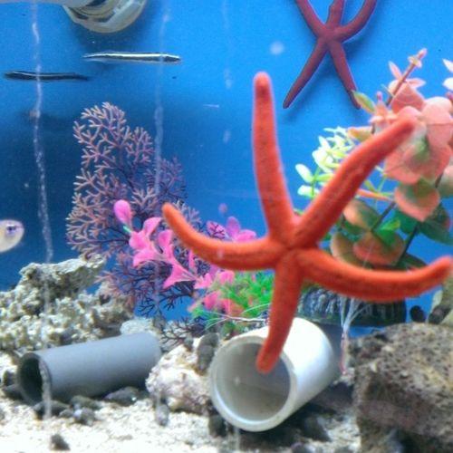 Starfish  Nofilter Beauty Aquarium ShoppingForFishies