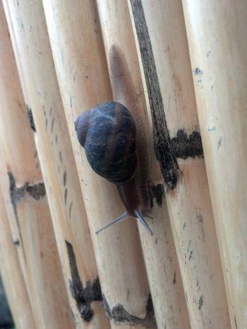 Snails Beatiful Nature Just Walking