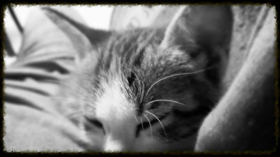 Cat Kitty Cat Cat♡ Cat Lovers Bossfi Ilovecats Catpic