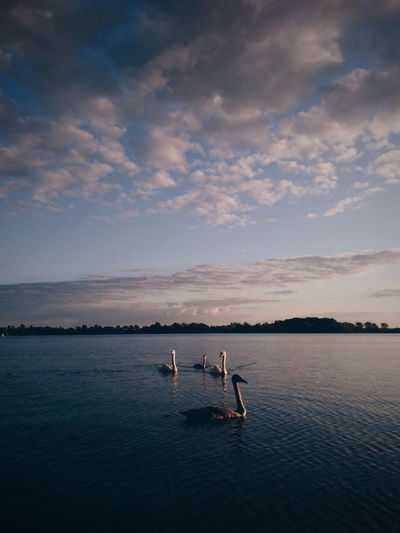 Swan lake. :) Togetherness Lake Water Outdoors Sky Nature Summer Horizon Over Water Landscape Beauty In Nature Sunlight EyeEm Best Edits VSCO EyeEm Best Shots Cloud - Sky Animal Themes Domestic Animals Swans Swan Lake Animals In The Wild