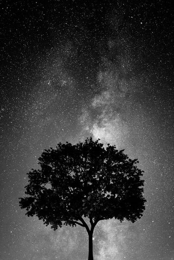 Night view Minimalism Minimal Black And White Photography Black And White Black & White Black And White Night Nature Photography In The Wild Stars Skyscape Night Photography Nightshot Night Sky Tree Sky Plant Star - Space Night Nature Space Star No People Star Field Beauty In Nature Silhouette Growth Outdoors Galaxy Tranquility