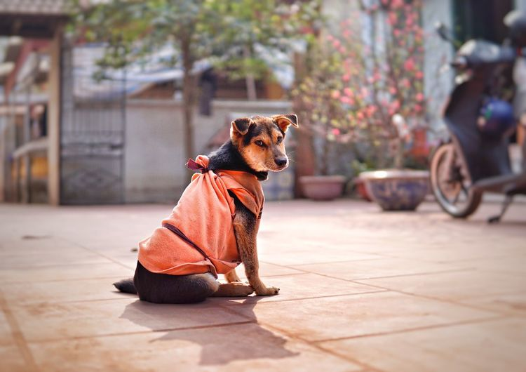Sad Dog Sadness Sad Sad & Lonely Cute Pets Domestic Animals Animal Themes Dog Mammal One Animal Pets Day Outdoors Portrait No People Sitting Full Length