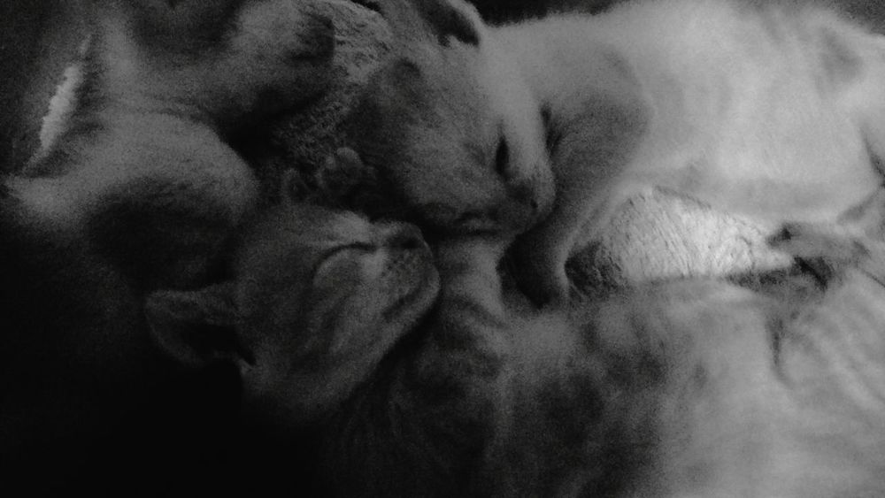 Collected Community Shades Of Grey Cats Catsagram Kitty Golden Slumbers Good Night Sweet Dreams