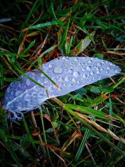 A hundred tales of a thousand miles travelled...... Nature By My Side Feathers Rainy Day Peaceful White EyeEm Nature Lover Rain Drops