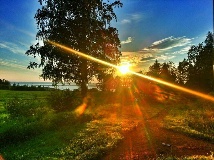 Art Summer Vibes Sunset