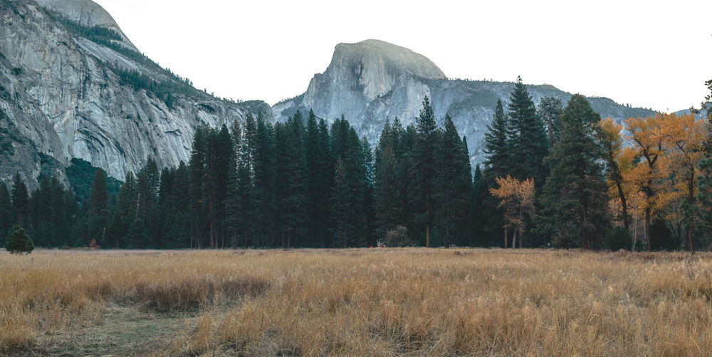 Scenic mountain region comprising the Sierra Nevada Range & Yosemite Valley of the Merced river; famous for giant sequoias, huge rock domes & peaks. Yosemite National Park Forrest Half Dome Landscape North Dome Panorama Panoramic Yosemite Yosemite National Park Yosemite Valley