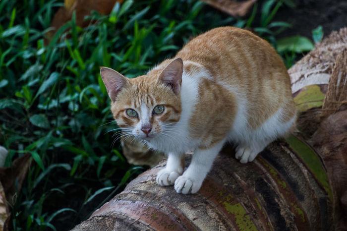 Animal Cat Feline Kitty Meow Nekko Pet Stray Cat