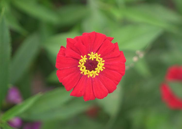 Red Flower Head