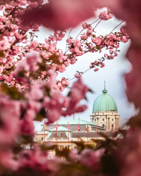 Spring in Buda Castle🌸 Castle Photography EyeEm Best Shots EyeEm Nature Lover EyeEmBestPics City Flower Tree Dome Place Of Worship Springtime Pink Color Sky Architecture Cherry Blossom Fruit Tree Blossom Church Historic History Plant Life In Bloom Cherry Tree Settlement Orchard Apple Tree Stamen Cathedral