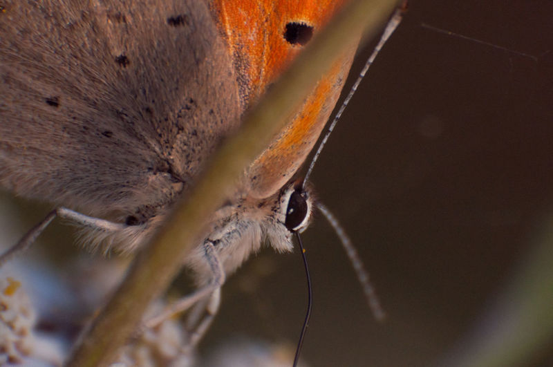 Butterfly Close-up No People Day Outdoors Freshness Animal Themes Makro Supermakro Eeyem Nature Lover