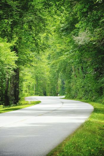 Great Smoky Mountains  Winding Road Green Nature_collection Trees EstEem Best Edits