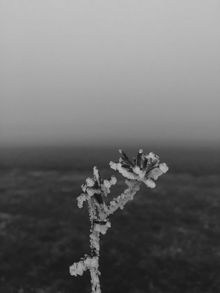 Nature Winter Cold Temperature Outdoors Snow No People Frosty Black And White Photography Christmastime ColdSeason