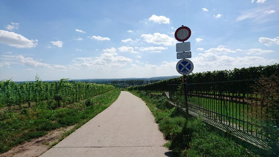 EyeEm Selects Sky Cloud - Sky Outdoors Day No People Grass Nature Path In Nature Vinyard Hochheim Am Main Germany