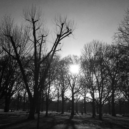 IPhoneography Blackandwhite The Places I've Been Today IPSTrees&Leaves