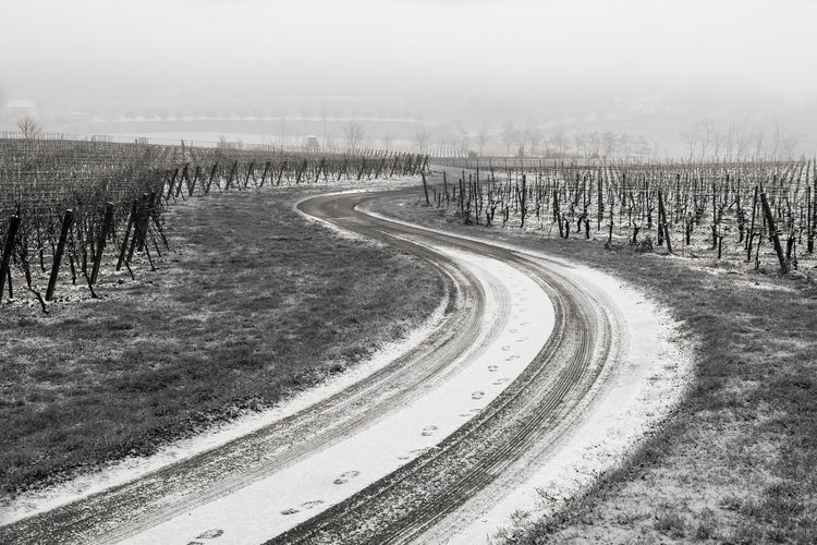 Landscape Outdoors Nature Sky Beauty In Nature No People Black And White Blackandwhite Photography Blancoynegro Snow ❄ Snowday Snow Country Road Countrylife Country Side Country Living 🚜🌾🌽 Winery Winery Tour Franciacorta Italy Brescia Winter