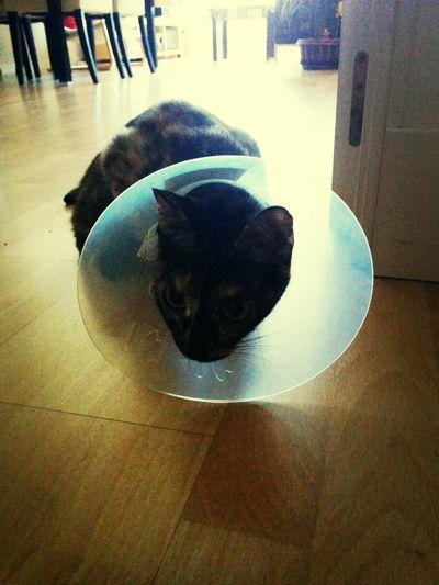 Poor  Cat Gato Chat :(