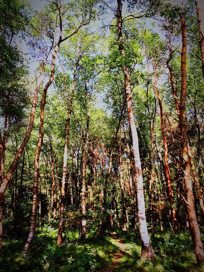 Full Frame Backgrounds Green Color Woods Leaves Sunrays