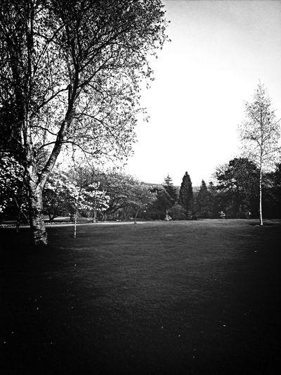 Nature Trees Fortheloveofgreen