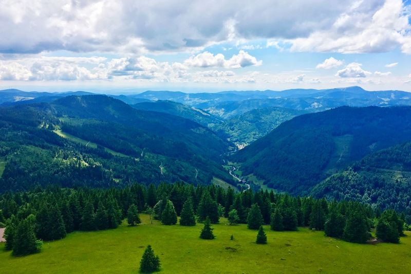Bäume 🌲 Feldberg Mountain Tree Beauty In Nature Sky Nature Tranquil Scene Tranquility Scenics Landscape No People Day Cloud - Sky Mountain Range Outdoors