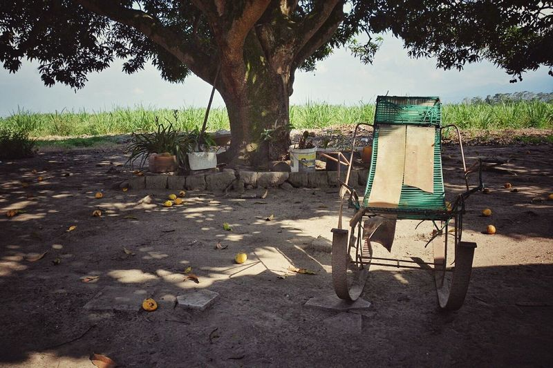 Anyone wants a mango? Abandoned Absence Backlit Broken Chair Chairs Damaged Fallen Fruits Field Fruits Fruits On The Ground Grass Green Light Mango Mango Tree Obsolete Old Outdoors Rocking Chair Ruined Rural Rural Scenes Rusty Wheel