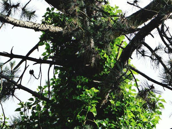 bizarre tree Beautiful Nature Beauty In Nature Tree Trunk Bizarreplants Tree_collection  Treelovers Bizarre Nature Showcase July