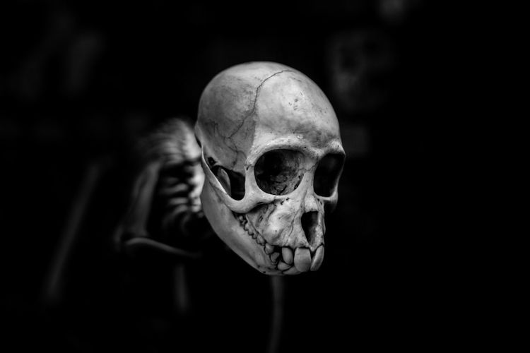 Bone  Human Skeleton Human Skull Human Bone Spooky Fear Skeleton Human Body Part Horror Indoors  Body Part Close-up Dark Skull Black Background Still Life People