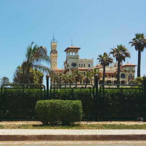 Palm Trees Trees Egypt Eyeem Egypt Palace Elmontazah Traveling Luxury Alexandria