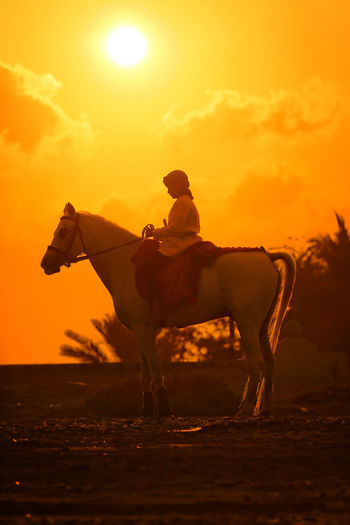 Golden Hour Sunset Sunset_collection Sunset Silhouettes Horse Riding Beach Photography National Dress Visit Oman Beautiful Nature Beautiful Oman Muscat , Oman